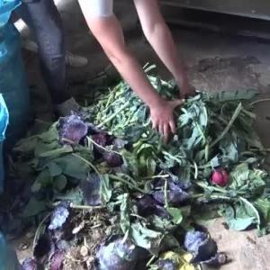 【犬猫動物動画まとめ】Sebze ve meyve atıklarından üretilen gübre yerli tohumlarda kullanılıyor