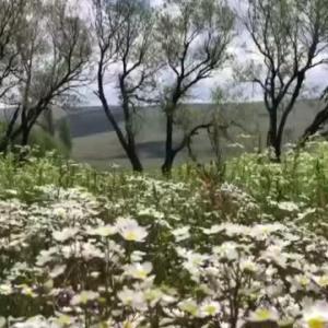 【犬猫動物動画まとめ】Son dakika haberleri: Allahuekber Dağları'nın eteklerinde görsel şölen