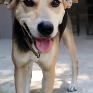 【犬猫動物動画まとめ】Morning dog freshment best dog video complication 2021