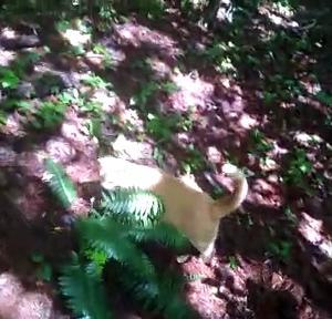 【犬猫動物動画まとめ】Fun loving dog and cat