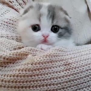 【犬猫動物動画まとめ】cute kitten videos short leg cat- KimsKennelUS