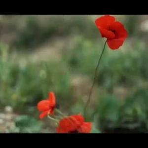 【犬猫動物動画まとめ】Son dakika haberi! Jandarma Teşkilatı'nın kuruluşunun 182. yıl dönümüne özel klip