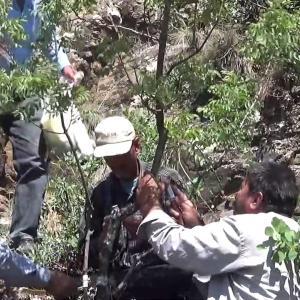 【犬猫動物動画まとめ】Kilis'te 6 bin menengiç ağacı Antep fıstığına aşılanıyor