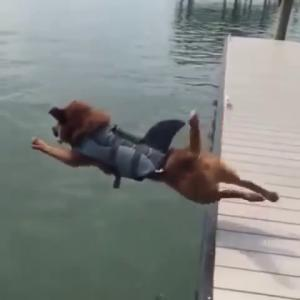 【犬猫動物動画まとめ】Dog want to dive in water but slip and fall in water