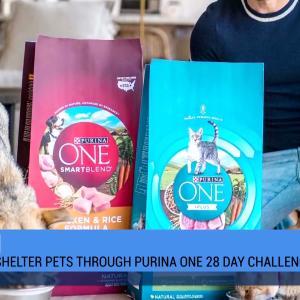 【犬猫動物動画まとめ】Purina One 28-Day Challenge with Derek Hough