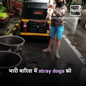 【犬猫動物動画まとめ】Raveena Tandon Rescues Stray Dog During Heavy Rain; Urges Everyone To Help Animals