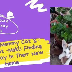 【犬猫動物動画まとめ】Stray Mommy Cat & baby cat -Mokli Finding Their Way In Their New Home- Sounds/Meow that attract cats