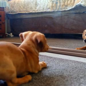 【犬猫動物動画まとめ】a-dog-fights-with-his-reflection-in-the-mirror