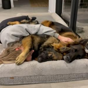 【犬猫動物動画まとめ】Dog Covers Woman With Paw to Return Cuddle