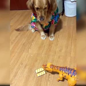 【犬猫動物動画まとめ】Baby Dogs - Cute And Funny Dog Videos Compilation #32   Aww Animals
