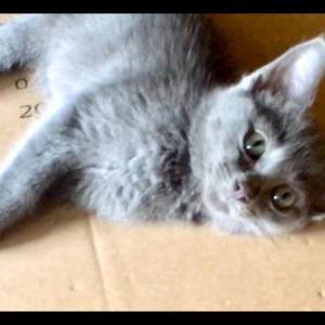 【犬猫動物動画まとめ】Kitten Close-Ups & Future Feral Kitten Plans - Angelica & Chuckie Are Hilarious