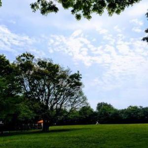 横浜 芝生と桜が魅力の公園2選 ドッグラン開催【根岸・本牧】