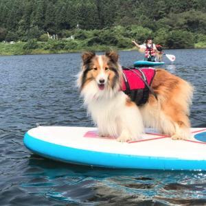 泳げない人も子供も犬も楽しめるSUP(サップ) 初めてでも大丈夫