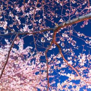 桜の下でワタシたちは家族になろうって思ったんだなぁ~
