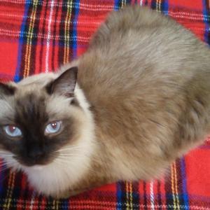 喘息やアレルギーで苦しむ猫を救う方法