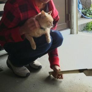 猫と一緒に栗木で年輪コースター作り!