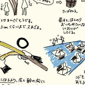 紙すきで和紙を作るまでの体験①コウゾ伐採〜