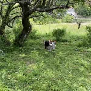 小道をDIY2 配分と要領。草を刈ったブランコ場