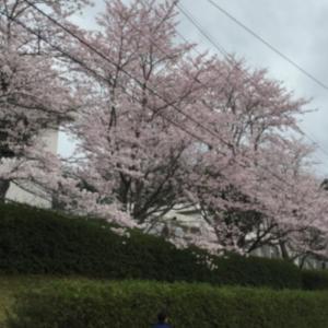 松野町桃源郷ハーフマラソン走ってきました