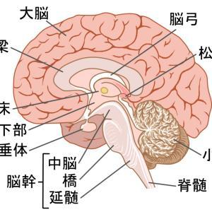 多発性脳海綿状血管腫の症状と経過② 弟の場合