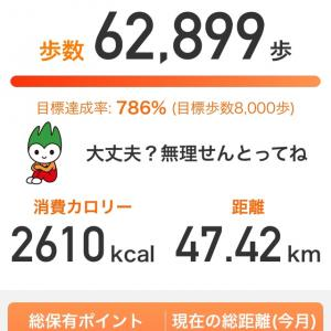 1日で6万歩オーバー!