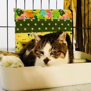 ご支援のお礼&ビーちゃんに手作りベッドをプレゼント