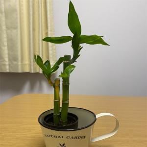 観葉植物のある暮らしはまだ憧れの憧れ。