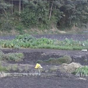 田んぼの名残を残す風景