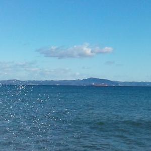 浜にウミガメが漂着していた