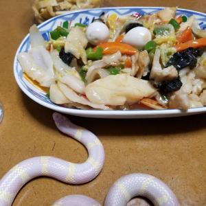 蛇たちとの晩餐(その3過去画像)
