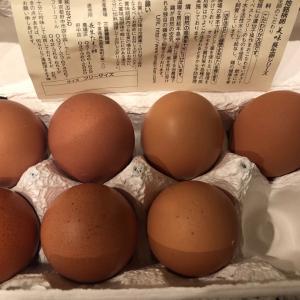 普通の倍のお値段の、美味しすぎる卵