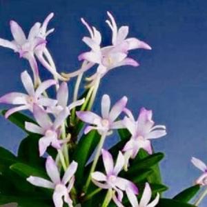 ❣❣新参者❣❣花物❣❣玉璽❣❣
