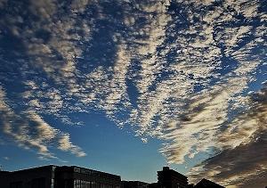 ❣❣風景【秋】❣❣製作途中❣❣不思議な国のはな❣❣