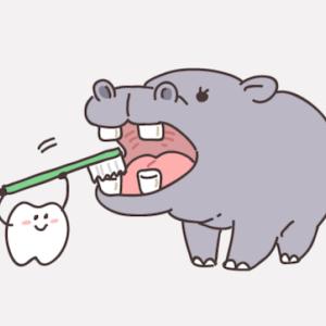 親知らずの虫歯の難抜歯を、抜歯外来でした話。