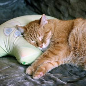 睡眠不足はデブの元!横向き専用枕【YOKONE3(ヨコネ3)】で質の良い眠りを!