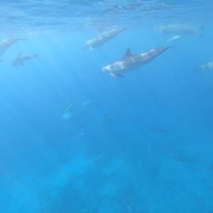 ハワイ島で野生のイルカと泳ぐツアーに参加してきました!