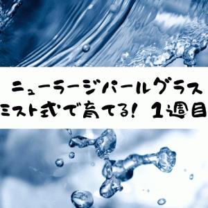 ミスト式でニューラージパールグラスを育てる【1日目~7日目】