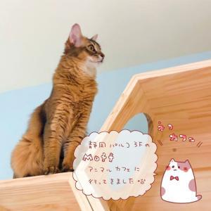 【猫カフェ】静岡の癒しスポット!可愛い猫に会える「Moff animal cafe」に行ってきました!