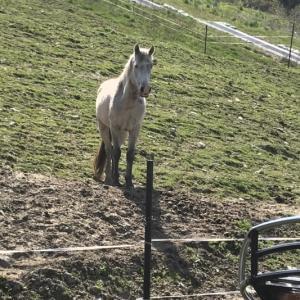 隠れた乗馬体験スポット・さくらおろち牧場