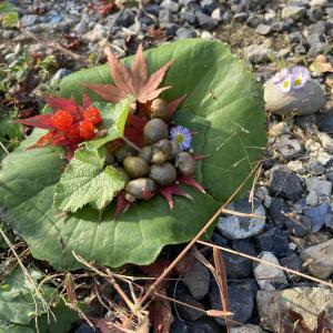 秋の庭/柿づくしの秋/解体ワークショップ/ARドリームロードさん/よっ得!?伊野いち