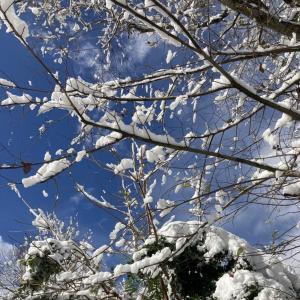 空き家活用/田舎の小さな音楽会/古民家リノベの絵本屋さん/雪/大晦日の清水寺