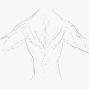 筋肉を描けるようになりたい5