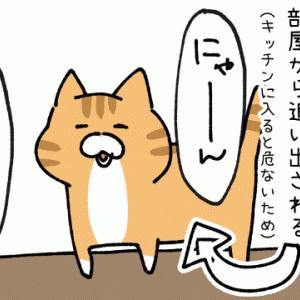 猫と深夜作業の話
