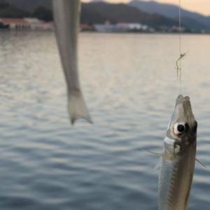 夏のキス釣り&カニ釣りin福井県