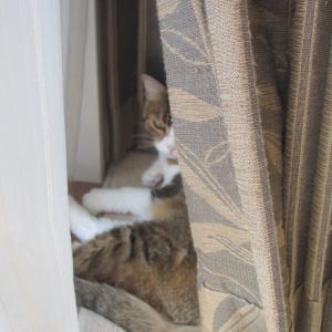 【きょうのにゃんこ】深窓のおじょうにゃんこ