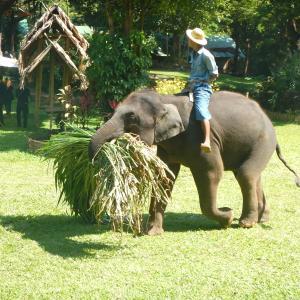 鎖に繋がれていない子ゾウがウロウロしているMaesa Elephant Campは天国みたいな場所でした!