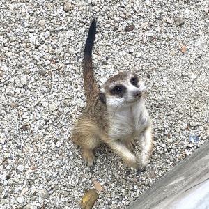 カオヤイ観光のついでに寄りたい体験型の動物園