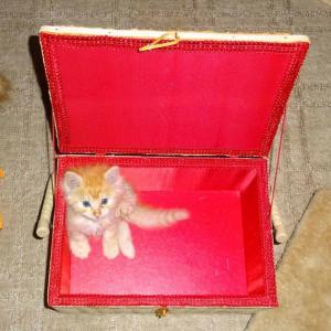 箱に入った。。。