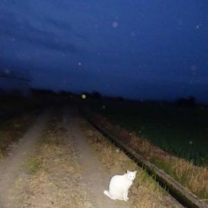 夜の外は。。。