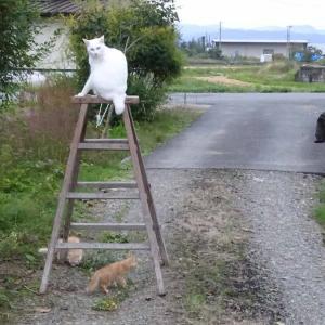 ネコと脚立